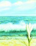 Ricordo della Costa Smeralda