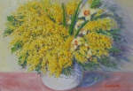 La mimosa della ierta