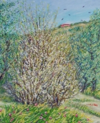 Primavera a Bacchereto